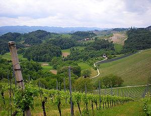 maribor, slovenia, vineyards
