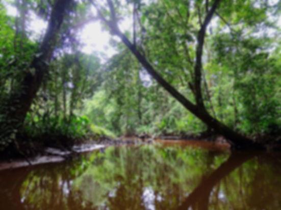 canoe trip tortuguero costa rica