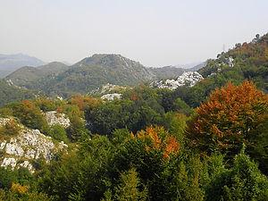 landscape, montenegro, trees