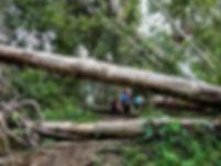 kokoda trail, track, papua new guinea, hike, trek, mountain, jungle