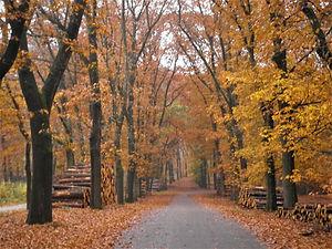 Hoge Veluwe National Park, netherlands