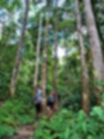 kokoda trail, track, papua new guinea, hike, trek, jungle, mountain