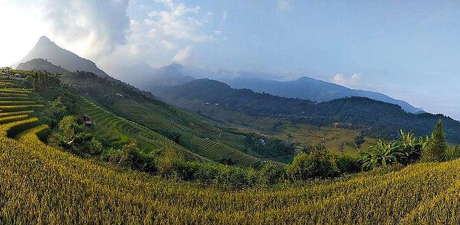 running, ultra, race, trail, vietnam, sapa, rice fields