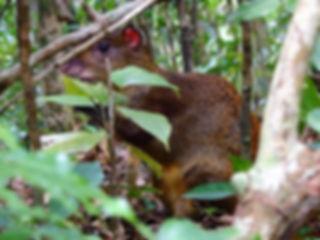 agouti Children's Eternal Rainforest Monteverde costa rica