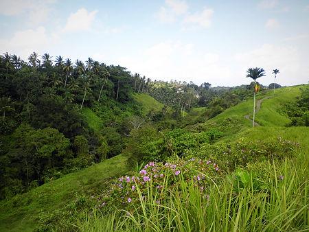 Campuhan ridge walk ubud bali indonesia
