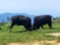 hiking, trail, hong kong, mountain, view, maclehose, scenery, bulls