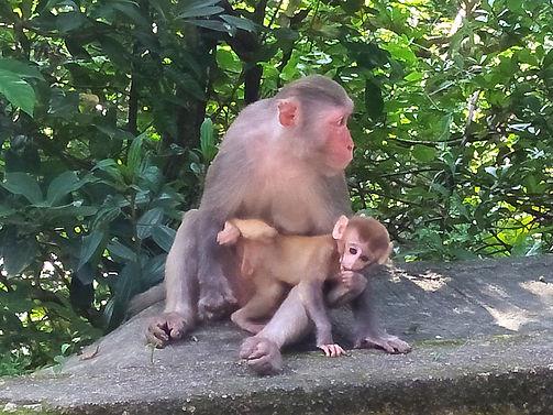 wilson trail, hong kong, hiking, mountains, monkeys