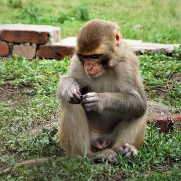 Monkeys everywhere