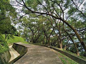 hong kong, lantau island, lantau trail, hiking, mountains, view, catchwater