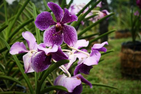 Orchid & Hibiscus Gardens