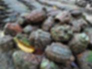 kokoda, trail, trak, papua new guinea, ammunition, grenade, mortar