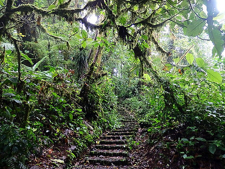 Monteverde cloud forest costa rica
