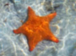 san blas islands, estrella island, starfish, kuna yala, panama