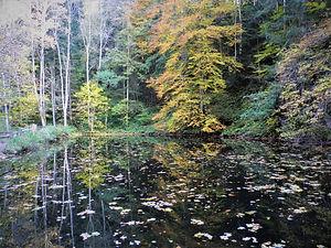 Ravennaschlucht, black forest, germany, freiburg, reflection, autumn, lake