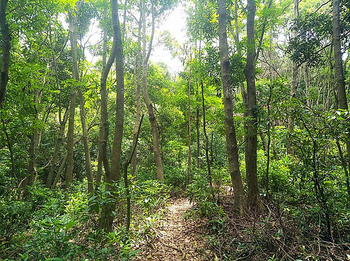 hong kong, trail, mountain, hiking, view, new territories