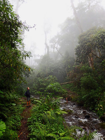 quetzal trail boquete panama