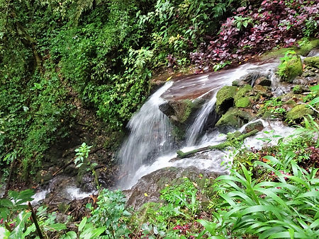 kokoda, trail, trak, papua new guinea, forest, jungle, mountain, hike, trek, waterfalls