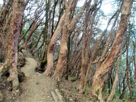 The slanting trees