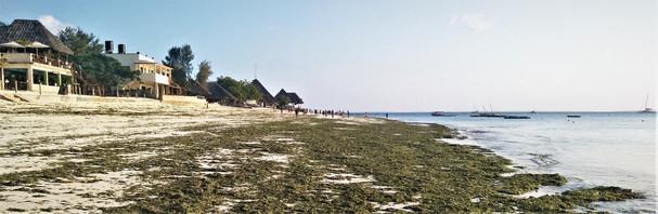 The seaweed-filled beach