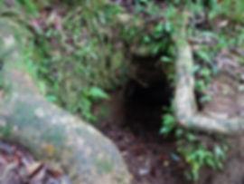 kokoda, trail, trak, papua new guinea, forest, jungle, mountain, hike, trek, japanese bunker