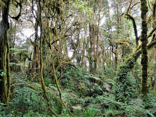 The Tarzan forest