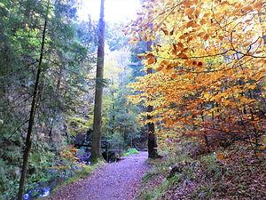 Ravennaschlucht, black forest, freiburg, germany, autumn, leaves