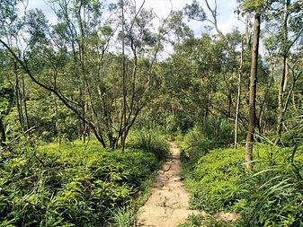 hong kong, lantau island, lantau trail, hiking, mountains, view, forest