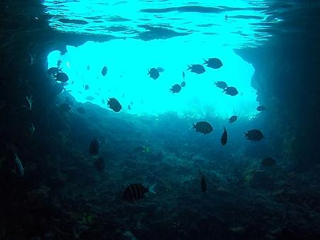 snorkeling, thunderball grotto, fish, exumas, bahamas