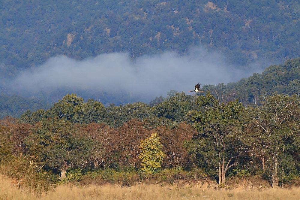 Corbett National Park Safari in India outside of Delhi