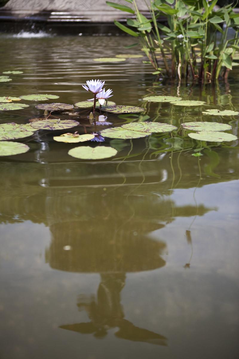 Bethesda Fountain © Reno Laithienne