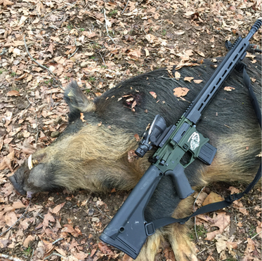 """Hog Down! This specialty .450 Bushmaster Spec Arms LLC ALPHA Hunter edition with an ELFTMANN Tactical Match trigger and Trijicon ACOG was designed for Boondox Motorsports with a custom """"Hogzilla"""" laser engraving by @armoryvalentine. Gun and scope both from Michigan companies done for our fellow Michigan company to use in the hills of Tennessee. Congrats on the successful hunt!"""