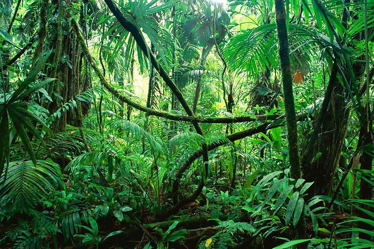 Ayahuasca forest.jpg