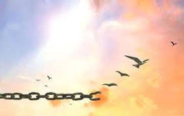 birds free.jpg