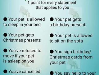 Spoilt Pet Test