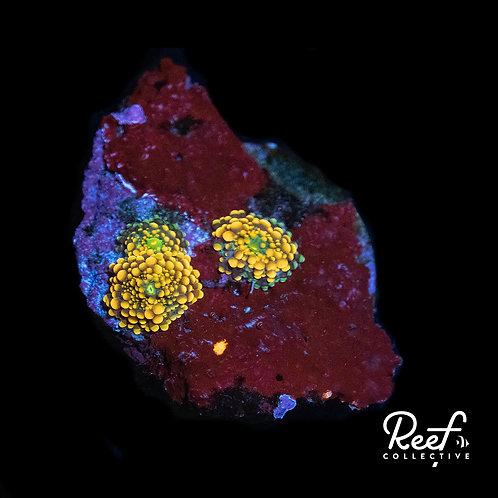 Baby Yuma Rock