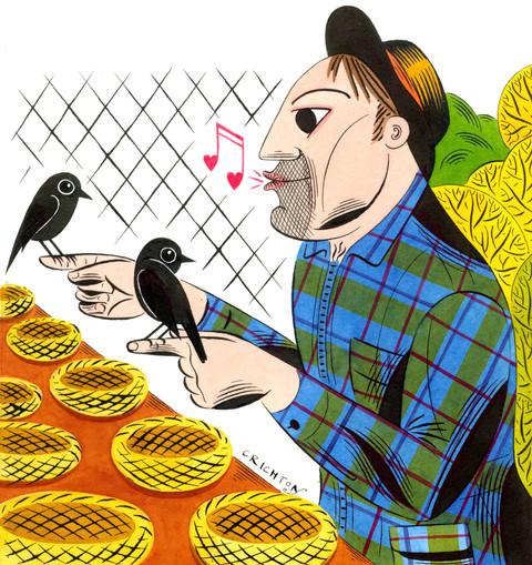 Black Robin endangered