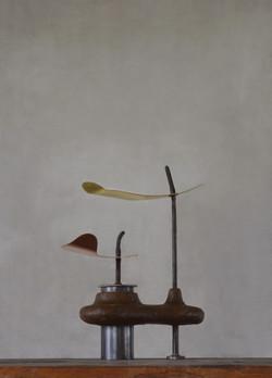 苗 / seedling