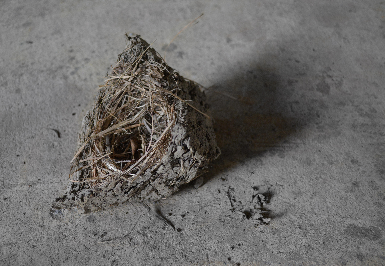 巢 / nest