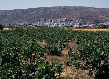 Domain Economou in Ziros, Sitia county.