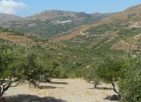 Lantzanakis Esates olive oil from Sitia.