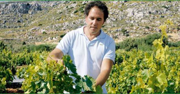 Yiannis Economou in his vineyards.