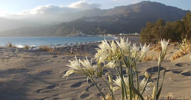 Sand dunes Southern Crete