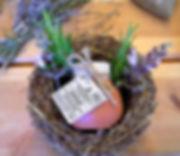 Herb workshops