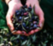 Toplou olives