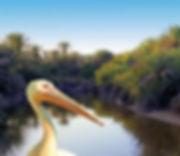 Vai nature and birds