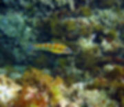 Snorkel in East Crete
