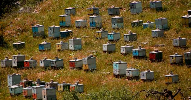 Beehives in East Crete.