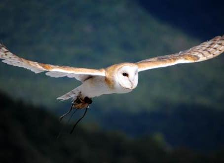 East Cretan Bird of Pray.
