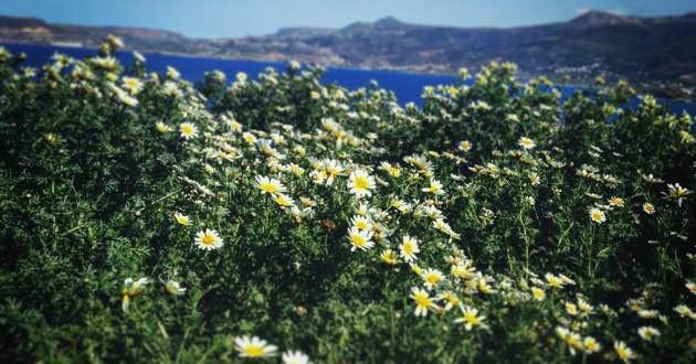 Flowers in Plaka, East of Crete.