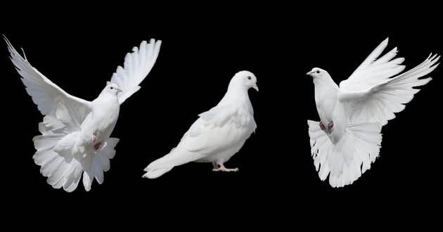 Pentecost Doves.